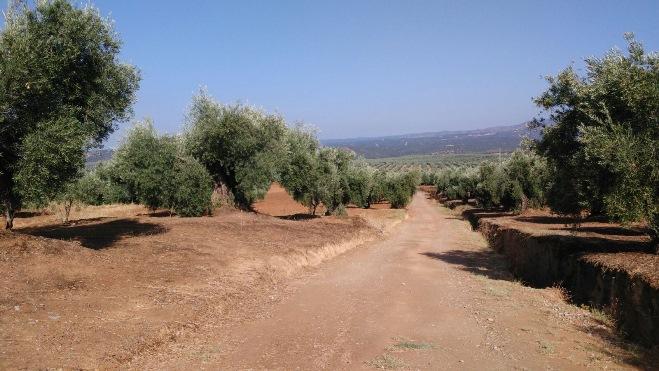 Camino-Juncal